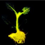 plante bioluminescente biotechnologies biotech DIY