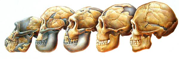 ed_skull