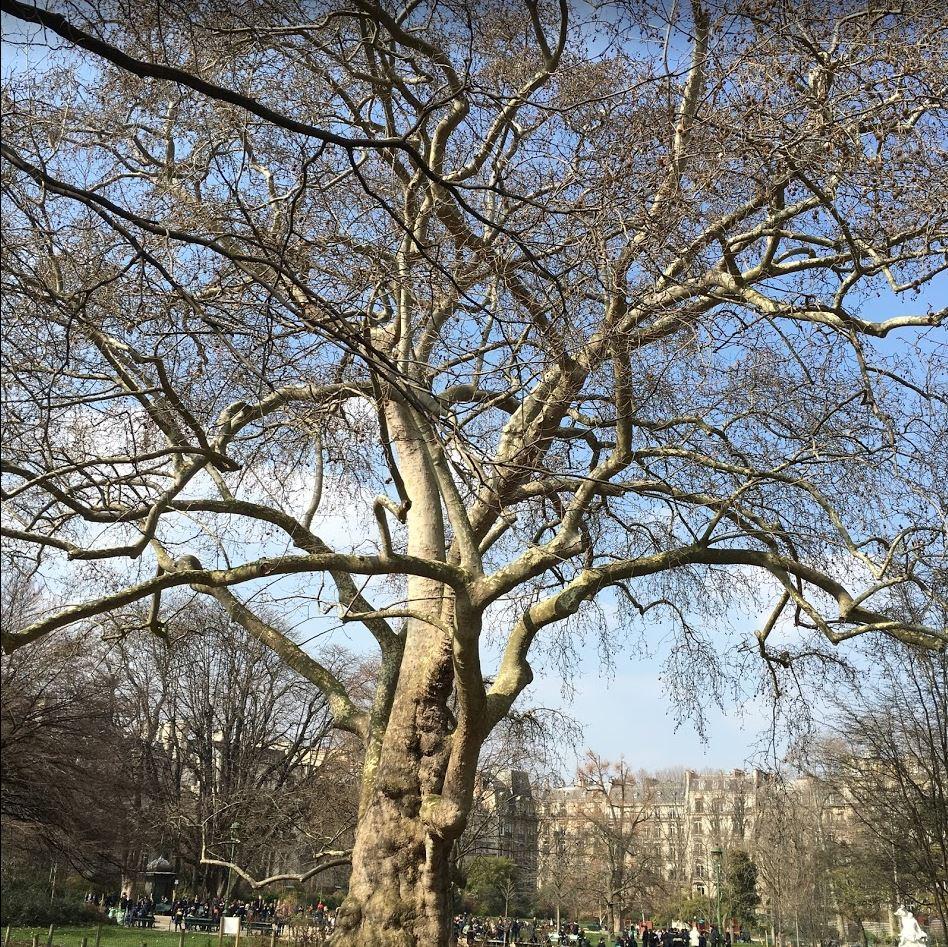 les arbres qui ne vieillissent pas - la mort de la mort #88, juillet